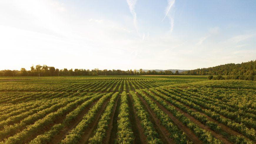 campo, coltivazione, agricoltura e pesticidi nel terreno