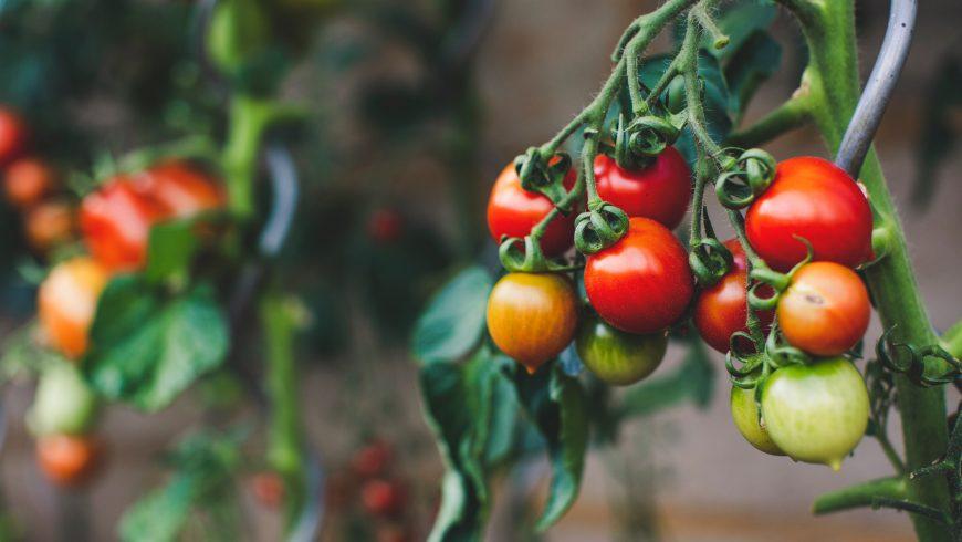 pomodori rossi, pesticidi e frutta e verdura
