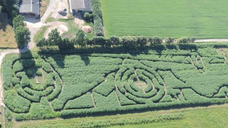 labyrinthe_miscanthus_mont_saint_michel
